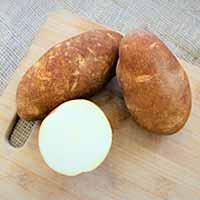 Norkotah278 Russet Seed Potatoes