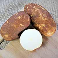Norkotah 296 Russet Seed Potatoes