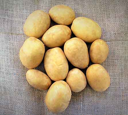 Soraya Yellow Seed Potatoes from San Acacio Seed