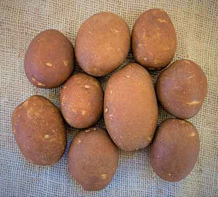 Centennial Russet Seed Potatoes from San Acacio Seed