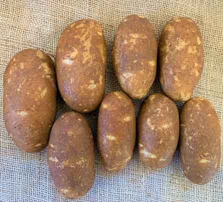 Reveille Russet Seed Potatoes from San Acacio Seed